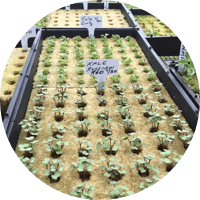 Tennessee Urban Farm | Seedlings for Tower Garden ®