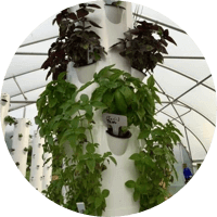 Tennessee Urban Farm | Tower Garden ® Growing