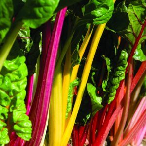 Tennessee Urban Farm | Swiss Chard