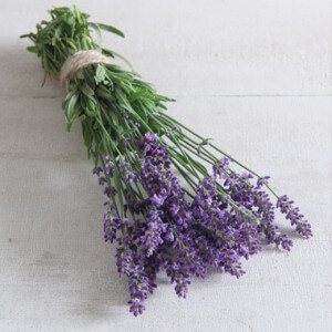 Tennessee Urban Farm | Lavender