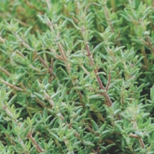 Tennessee Urban Farm | Thyme, Orange