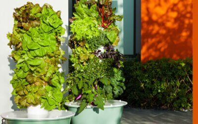Tower Garden®: What Can I Grow?