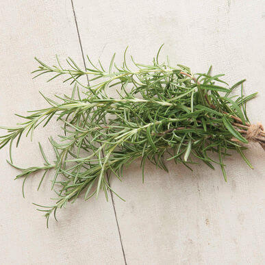 Tennessee Urban Farm | Rosemary