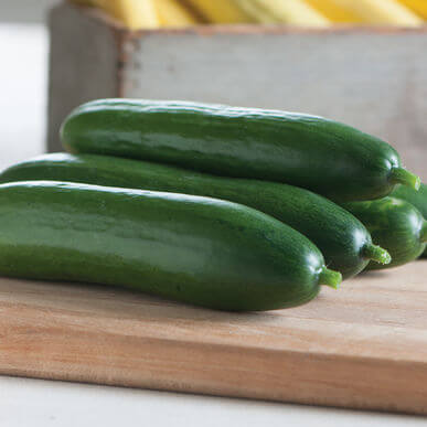 Tennessee Urban Farm | Diva Cucumber