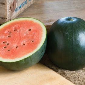 Tennessee Urban Farm   Watermelon