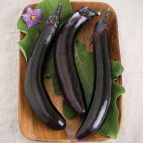 Tennessee Urban Farm | Eggplant Orient Express