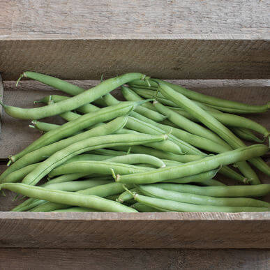 Tennessee Urban Farm | Bush Beans