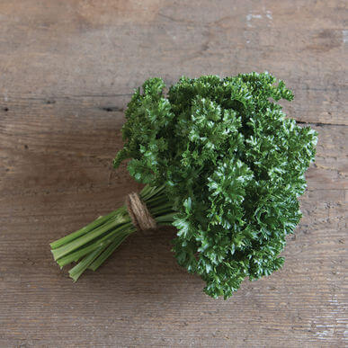 Tennessee Urban Farm | Parsley Curly