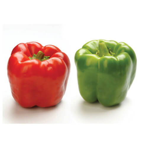 Tennessee Urban Farm | Bell Pepper